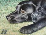 Arts And Dogs - flat coated retriever